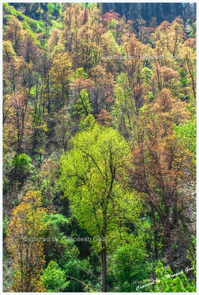 Colourful trees near Batahad (Bathad)