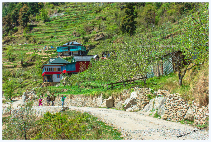 Traditional Himachali houses, nestled amongst terrace fields and apple orchards, on Sharchi Road