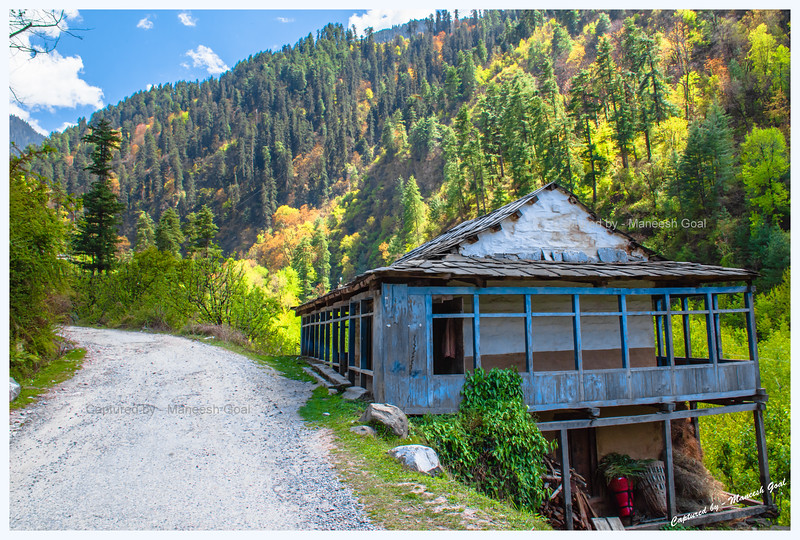 Traditional Himachali house against the backdrop of colourful trees