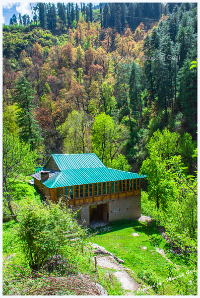 Perfect dwelling amidst colourful trees near Batahad (Bathad)