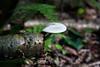 Fungi - Kinsua Dam, PA #3418