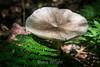 Fungi - Kinsua Dam, PA #3465