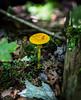 Fungi - Kinsua Dam, PA #3469