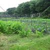 Vegetable garden at Shapinsay Island in Scotland, United Kingdom.
