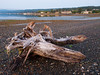 Driftwood, Dyes Inlet