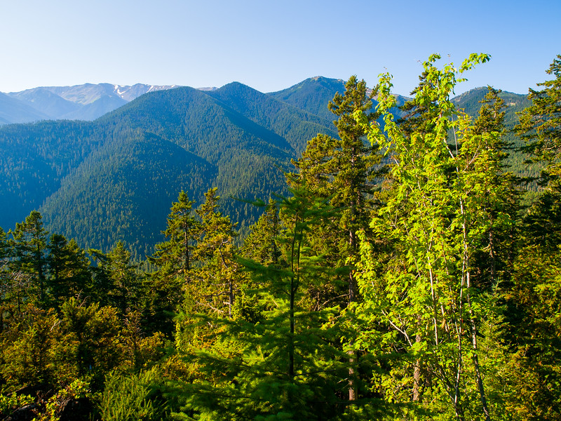 View from the road to Hurricane Ridge