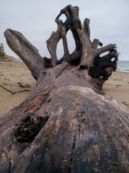 Driftwood on the beach at Dungeness Recreation Area