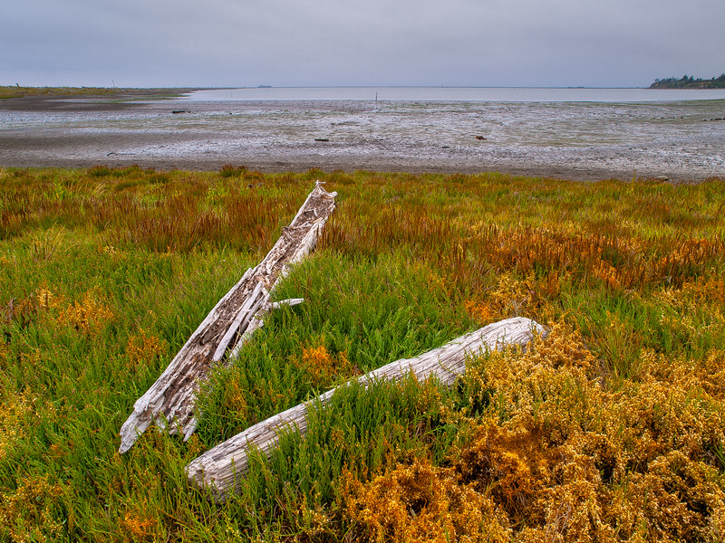 Driftwood on the beach at Dungeness Bay (looking ~ northeast)