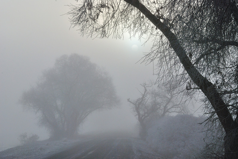 Morning Tule Fog