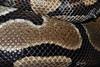 Mitch, a ball python