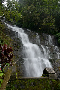 Waterfalls enroute from Thekkady to Kochi in Kerala. Thekkady (Idukki district) in Kerala is the location of the Periyar National Park, which is an important tourist attraction in India. Thekkady sanctuary is located near the Kerala-Tamil Nadu state border and is famous for its dense evergreen, semi-evergreen, moist deciduous forests and savanna grass lands. It is home to herds of elephants, sambar, tigers, gaur, lion-tailed Macaques and Nilgiri Langurs.