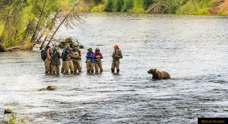 An inquisitive bear hopes these anglers might drop a fish his way.