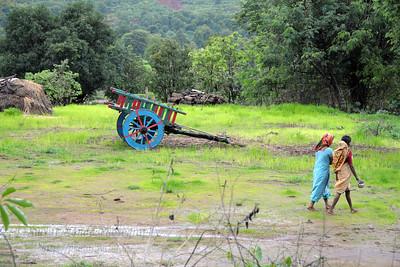 Women walking in front of a cart at kolwan; maharashtra; MH; india