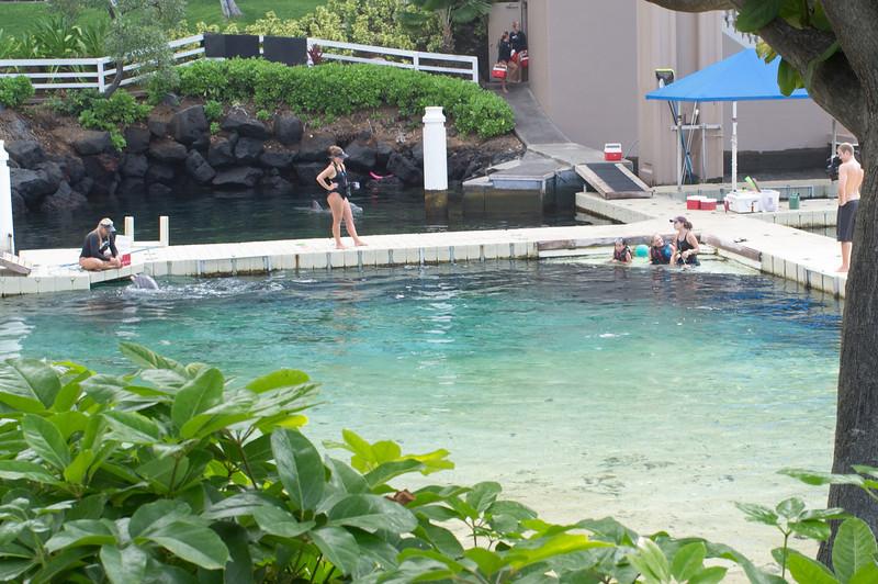 Dolphin encounter - Kona Hilton Hotel