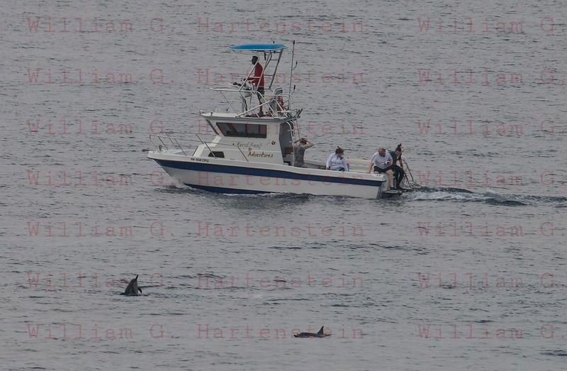 Dolphins off Whites Sands Beach Kona, HI. 11-26-17