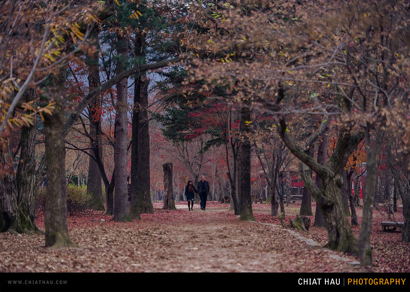 Travel Photography by Chiat Hau Photography (Korea - Nami Island)