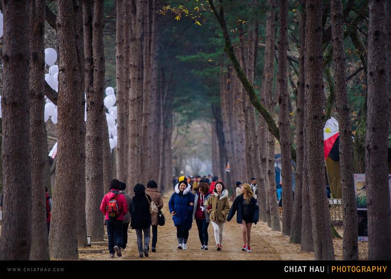 Travel Photography by Chiat Hau Photography (Korea - Nami Island)