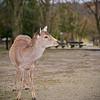 Nara Park, Nara, Japan