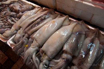 Squid at seafood market