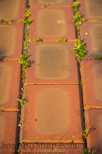 Detail of an orange brick road with small plants