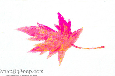 Isolated maple leaf painted on concrete