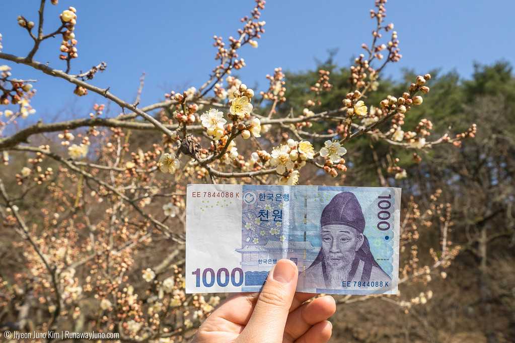 Maehwa flower is on the backside of the 1000 won banknote