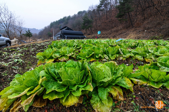 My uncle's property in the mountains, Gangwondo Pochon
