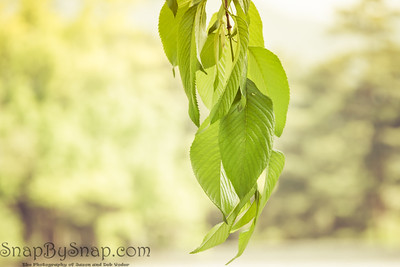 Hanging Green Leaves Background