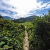 Jirisan National Park in Summer