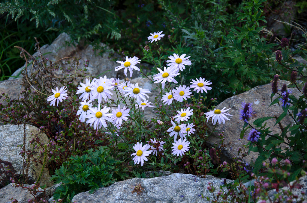 Wildflowers of Seoraksan