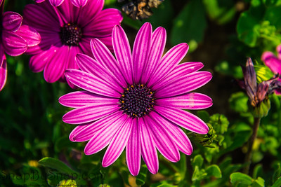 Detail of a large purple flower with vibrant colors
