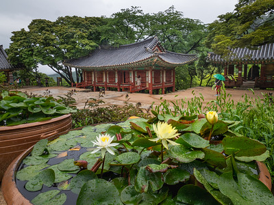 Lotus and Pagodas