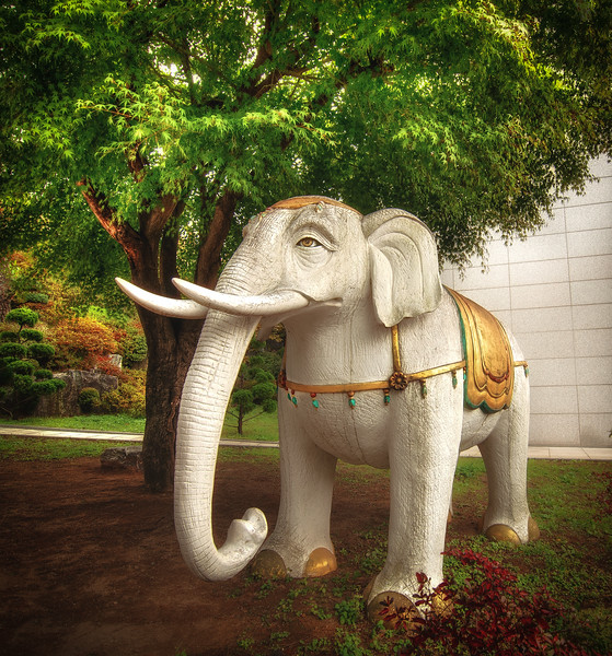 Elephant in the Garden