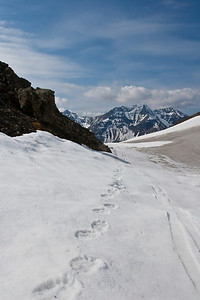 Bear tracks and ski tracks.