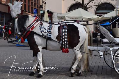 Krakow, Poland (10 of 588)