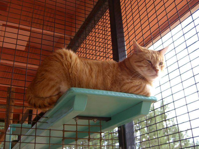 O'Mally at Kitty Motel, my Romeo twin