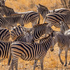 A Multitude of Stripes