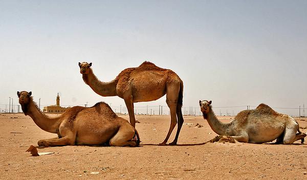 2008 Kuwait