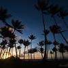 Sunrise through the palm grove.