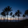 Coconut palms guard the shore at dawn.