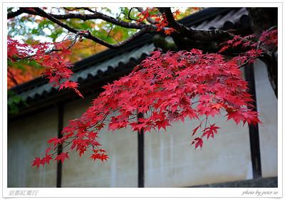 Kyoto Autumn Color 2011