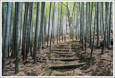 A bamboo grove at one of the less famous temples in Saga.