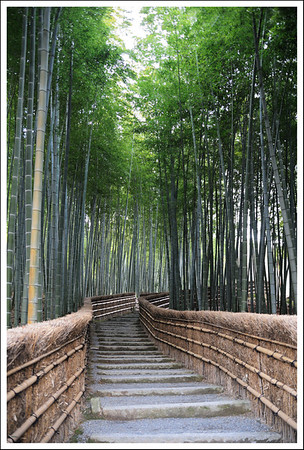 A bamboo grove a the last temple we visited.