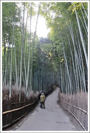 The famous bamboo grove in Saga.