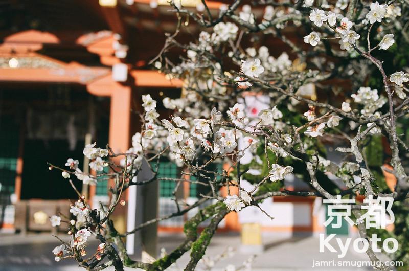 Ume at Nagaoka Tenmangu Shrine