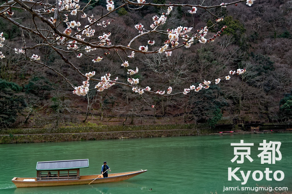 Plum Blossom in Arashiyama