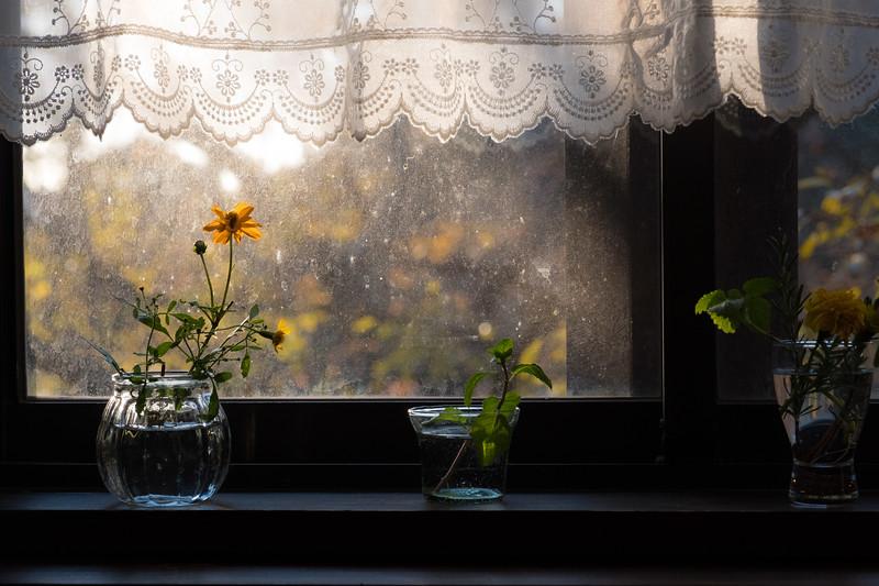 Kobe Window