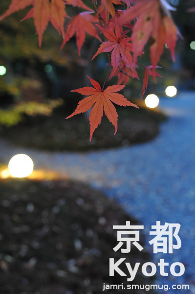 Japanese Garden Light Up