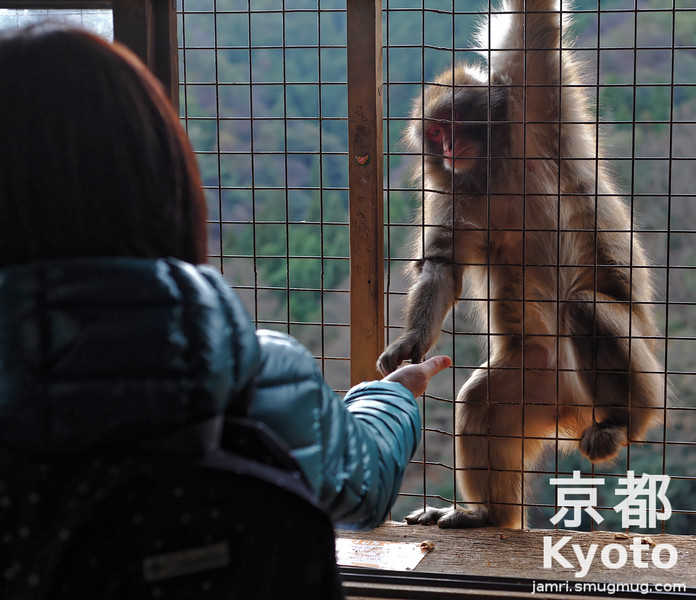 Feeding a Monkey