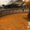 Golden Carpet at Nishi-Hongwan-ji